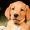 Hundeshooting / Welpenshooting – Fotos für die Ewigkeit